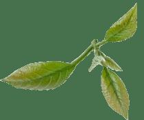 leaf2-210x175